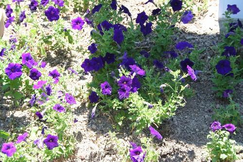 小串郷駅の花