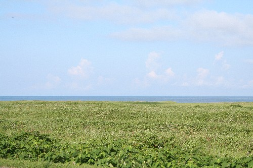 抜海原生花園と日本海